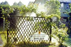 Slide 079-71 (Steve Guess) Tags: garden sprinkler water byfleet spray sign rose trellis surrey england gb uk home