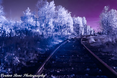 Tracks (vernonbone) Tags: 1855kitlens 2016 d3200 eastpoint eastpointpark infrared lens november ontario landscape leadinglines nikon outside street tiffenfilter tracks tree
