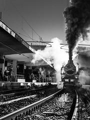 Iron horse snort (savolio70) Tags: ironhorse steamlocomotive locomotivaavapore vapore steam train treno savolio stefanoavolio bianconero biancoenero monocromo sbuffo snort blackwhite blackandwhite binari tracks ostiense roma rome horse