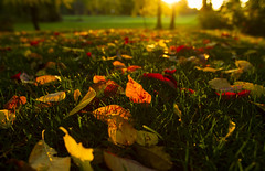 My Streets of Gold (Matt Champlin) Tags: kipmoore dirtroad fall autumn gold golden peace peaceful morning leaves leaf nature landscape october idyllic quiet calm calming canon 2016 sunrise grass colorful