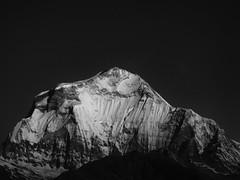 Dhaulagiri I (James C Farmer) Tags: annapurna nepal asia mountain snow himalyas