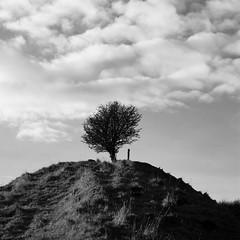 The tree on the hill (Fife Walking (Susan B)) Tags: dalbeath cowdenbeath fife scotland nature outdoors tree lonetree