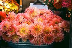 TSD_RAW_161021-9 (DohertyTim) Tags: ektar100 farmersmarket flowers nikonsp scan somerville unionsquare