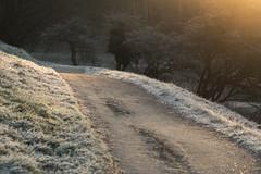 Encounter with the Headless Horseman (Birdiebirdbrain) Tags: naturfoto naturephotography nature natur fredericiaramparts fredericia denmark fredericiavold danmark nikond3300 nikon tokina tokina100mmf28 macro rime rimfrost frost winter cold