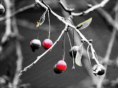 little reds (Lana Pahl / Country Star Images) Tags: colorsofflickr catchycolors ilovenature artdreamed artofbokeh autumncolors