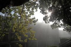 Entre sol y niebla (eitb.eus) Tags: eitbcom 27117 g1 tiemponaturaleza tiempon2016 alava laguardia miguelangellopezdelacalle
