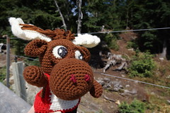 DSC00206 (The Crochet Crowd) Tags: crochetmoose amigurumi moose crochet doll alaska britishcolumbia thecrochetcrowd michaelsellick jeannesteinhilber danielzondervan crochetcruise mooseontheloose