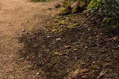 Humedad del bosque_.jpg (ballende) Tags: humedad wet humidity ground focus contrast parque coquimbo chile