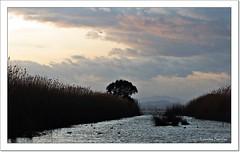 La Albufera al atardecer (Lourdes S.C.) Tags: laalbufera cielo nubes atardecer provinciadevalencia