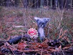 Welcome November, tiny grumpy Kitty's favorite season :) (pianocats16, miau...) Tags: mushroom toadstool forest woods tiny kitty cat felted cute handmade autumn