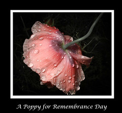 We will never forget (bonnie5378) Tags: flowers poppy nov11 2016 remembranceday tears sorrow sacrifice