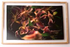 Lírios (gleicebueno) Tags: tecido cetim photo photographerinbrazil flowers impressao quadro gleicebueno gleicebuenofotografia flores