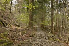 IMGP4968 (roughlegged) Tags: photography pentax k3ii apsc japan travel wanderlust forest path hike nikko