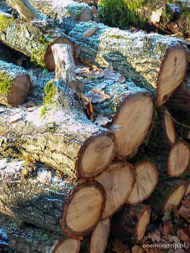 161112-140822-luboradza lasy