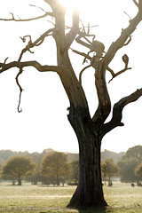 'Snag' (Jonathan Casey) Tags: dead tree autumn hanging branches bare d810 nikon 200mm f2 vr