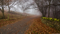 Misty Trail (smurkej) Tags: mist fog trees tree leicestershire golden leaves path trail misty enchanting