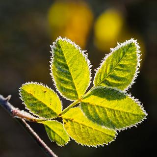 Leaves & Lights (2)