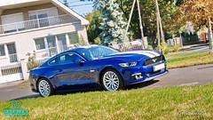 Mustang_11 (holloszsolt) Tags: ford mustang 50 outdoor vehicle sport car nanolex si3 hd autokeramia