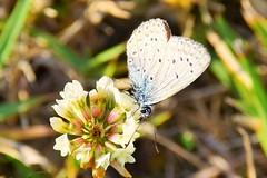 Good morning world (only_sepp) Tags: allaperto farfalle fiori di campo erba verde colore butterfly insetto animale fioritura pianta fiore profondità ngc allnaturesparadise