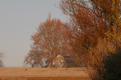 Tervuren.Belgium (Natali Antonovich) Tags: tervuren landscape winter nature belgium belgie belgique birds
