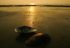 Golden light at the beach (Krnchen59) Tags: strand beach muscheln sonnenuntergang sunset stpeter ording nordsee northsea schleswigholstein germany krnchen59 elke krner