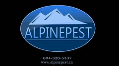 Alpine Pest Control Ltd -- Vancouver (alpine-pest) Tags: pestcontrolvancouver vancouverpestcontrol pestcontrol fleas roach spider spiders bedbug bedbugs crawlinginsects insect carpetbeetle beetles pests rat mouse cockroach wasps hornet waspnest fly flea moth ant ants carpenterants raccoon squirrel skunk silverfish exterminator wildlife rodent mice rats atticcleanup pestremoval wasp