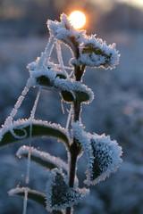 winters zonsopkomst (zaqina) Tags: zonsopkomst sunrise winterslandschap