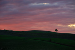 Under a blood red sky (Francesco Bianchi) Tags: sunset clouds valdorcia trees italy