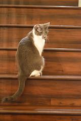 DSC_0079 (kaymann+l+woo) Tags: catsofinstagram cats cute