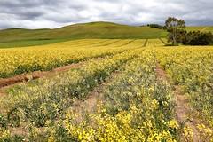 6Y1A1451_Snapseed (jensen_chua) Tags: australia newsouthsouthwales nsw tasmania tassie downunder roadtrip phototrip tourism