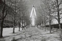 London (goodfella2459) Tags: nikon f4 af nikkor 24mm f28d lens fujifilm neopan acros 100 35mm black white film analog london eye trees city milf
