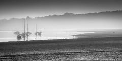 Orwell Morning. (fjnige) Tags: landscape monochrome blackandwhite orwell boats river estuary shoreline shore mist d7100 nikon nikkor 80200mm