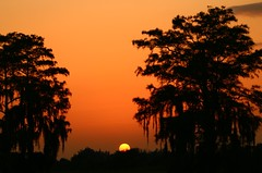 Tree Flanked Sunset (tclaud2002) Tags: trees sunset sky orange sun florida stuart highschool southfork pratwhitneyroad