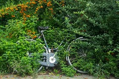 (ingehoogendoorn) Tags: green bike bicycle groen thenetherlands bikes bicycles fietsen fiets bikeparking bikewreck dutchbike rustinpeace dutchbikes forgottenbike