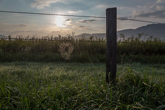Come into my web (Tracey Rabjohns) Tags: fog fence tn spiderweb cadescove greatsmokiesnationalpark