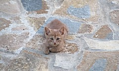 Kitten in our hotel (SuperSpotter) Tags: sunset summer dog sun mountain beach cat kitten greece cave samos pythagoras ormos votsalakia superspotter