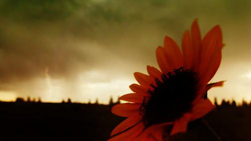 Sunblolt