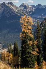 20151003-IMG_9961 (Ken Poore) Tags: washington hiking cascades larches northcascades geolocation maplepassloop geocity camera:make=canon exif:make=canon goldenlarches geocountry geostate exif:lens=ef24105mmf4lisusm exif:focallength=105mm exif:aperture=ƒ90 exif:model=canoneos6d camera:model=canoneos6d exif:isospeed=200 geo:lon=12075369333333 geo:lat=48500665
