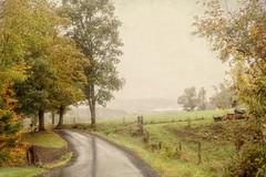 Misty Mountain Road (Singing Like Cicadas) Tags: road autumn mist nature rain fog outdoors countryside september westvirginia appalachia canaanvalley 2015 tuckercounty onethousandgifts