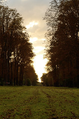 Parc de Saint-Cloud,  la tombe du jour (cl_p) Tags: automne saintcloud marronnier hautsdeseine parcdesaintcloud