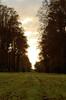Parc de Saint-Cloud, à la tombée du jour (cl_p) Tags: automne saintcloud marronnier hautsdeseine parcdesaintcloud