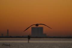 _DSC1023 (Tedj1939) Tags: morning sky sun nature clouds sunrise river dawn seascapes predawn indianriver