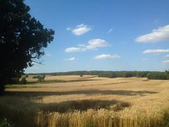 Landscape (adriank1410) Tags: light summer sky holidays memories poland polska wakacje lato wspomnienia iphone5 iphoneography lublinvoivodeship