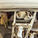 cat144, cat145, citizens of Porto Santo