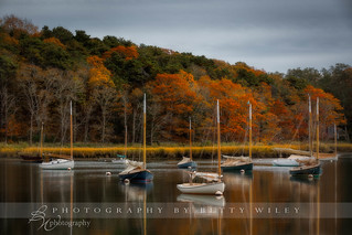 Cape Cod Autumn