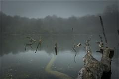 La balsa misteriosa... (Explore) (Jose Cantorna) Tags: balsa niebla agua euskadi nikon d610 reflejos alava araba xxviiexposicionalavavisionembalsesylagunas