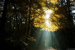 Strahlen (ralf.kerkhoff) Tags: deutschland herbst jahreszeit natur himmel nrw sonne deu sonnenstrahlen naturpark hohemark reken