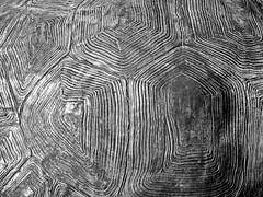 Natural  texture (keinidyll) Tags: bw detail macro salzburg zoo turtle carapace