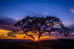 A Little dream (Juro_Photography) Tags: sunset sky naturaleza nature outdoors landscapes bravo ocaso nigth longexposurephotography sonya580