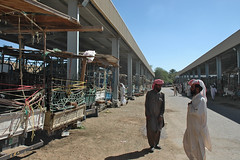 al ain livestock souq (3) (Parto Domani) Tags: al united uae arabic east emirates arab oriente middle peninsula livestock mercato medio souq uniti arabi bestie arabica ain penisola emirati bestiame